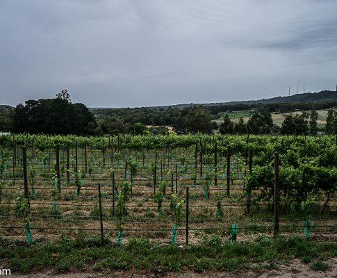 Adelaide Hills – Ashton Hills