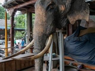 Sri Lanka, Colombo Sri Lanka, Tuk Tuk Safari Colombo Sri Lanka, Tuk Tuk Safari Sri Lanka, Tuk Tuk Safari
