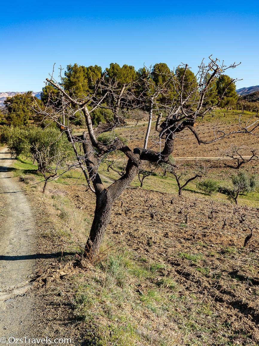 Priorat, Clos Mogador, Wine, Wineries, Priorat Spain, Spain
